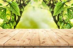 Leerer Holztisch in einer Sonne durchnäßte Sommergarten Lizenzfreies Stockbild