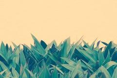 Leerer Kopienraum für Text - Grün lässt Muster auf Hintergrund der Pfirsichfarbwand Natürliches abstraktes Fahnendesign stockfotos