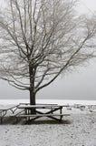 Leerer Park im Winter. Stockbild
