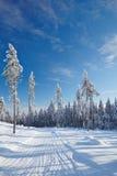 Leerer Schnee deckte Straße im Winterwald ab Stockfoto