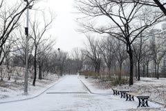 Leerer schneebedeckter Park an einem kalten Tag Stockbilder