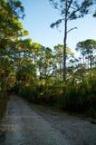 Leerer Schotterweg in Florida Stockfotografie
