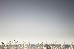 Leerer Sommerhimmel mit einem Band von blühenden Häschen binden Rand der Gräser unten an Stockbild