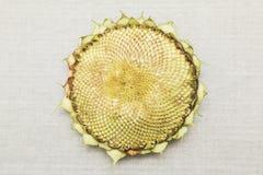 Leerer Sonnenblumenkopf Stockfotos