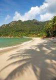 Leerer Strand mit Kokosnusspalmenschatten Stockfotografie