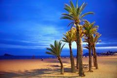 Leerer Strand mit Palmen Lizenzfreies Stockfoto