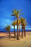 Leerer Strand mit Palmen Lizenzfreies Stockbild