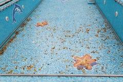 Leerer Swimmingpool Stockbild
