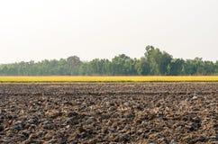 Leerer trockener unfruchtbarer Boden, Getreidefeld und grüner Wald Lizenzfreie Stockfotografie