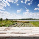 Leerer weißer Holztisch Reihen von Anlagen auf einem bebauten Landwirtgebiet stockfotos