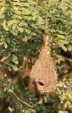 Leeres baya Nest Lizenzfreies Stockbild