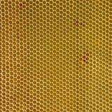 Leeres Bienenwabenwachs Lizenzfreies Stockfoto