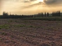 Leeres Feld mit Traktor spürte das Vorbereiten für das Wachsen von neuen Ernten auf Stockbild
