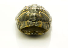 Leeres Haus der Schildkröte Stockfoto