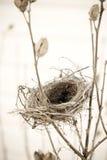 Leeres Nest Lizenzfreies Stockbild