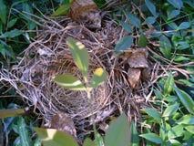 leeres Nest Stockfotos