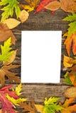 Leeres Papier mit Herbstlaub Stockbilder
