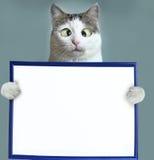 Leeres Papierblatt des Katzengriff-freien Raumes im Rahmen Lizenzfreies Stockbild