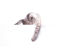 Leeres Plakat der Katze Stockfotos