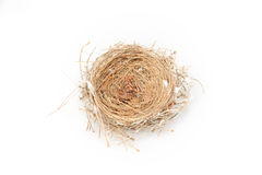 Leeres Vogel-Nest Lizenzfreie Stockfotos