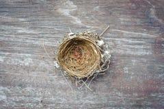 Leeres Vogel-Nest Lizenzfreie Stockbilder