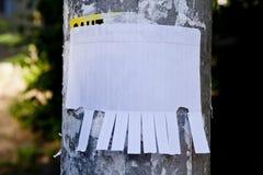 Leeres Weißbuch mit reißen Vorsprünge auseinander stockfoto