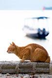 Lees kat bij het overzees met boot Stock Afbeeldingen