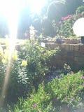 «Leeubekkies» в flowerbed Стоковая Фотография