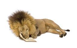 Leeuw (8 jaar) - leo Panthera Royalty-vrije Stock Foto's