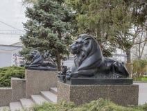 Leeuw bewaken royalty-vrije stock foto