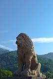 Leeuw in de Karpaten Stock Afbeelding