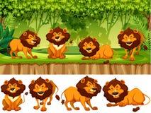 Leeuw in de wildernis royalty-vrije illustratie