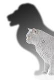 Leeuw en kat Royalty-vrije Stock Fotografie
