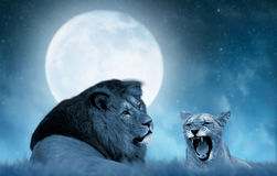 Leeuw en leeuwin op de savanne Stock Fotografie