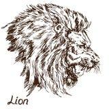 Leeuw het grommen het portret, opent een verbitterde mond, hoektanden royalty-vrije illustratie