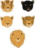 Leeuw, panter, luipaard, tijger en leeuwin Royalty-vrije Stock Afbeeldingen