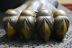 Leeuwbenen Stock Afbeelding