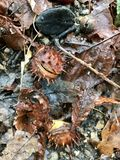 Leeves autumn on forest floor Stock Photography
