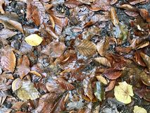 Leeves autumn on forest floor Royalty Free Stock Photography