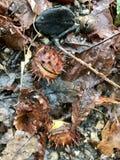 Leeves-Herbst auf Waldboden Stockfotografie