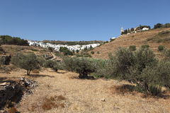 Lefkes, on Paros island, Greece. View of Lefkes village on Paros island, Greece. In the foreground, an olive grove Stock Images