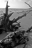 Left Behind. Old rope tangled in deadwood on a beach - Black and White royalty free stock photography