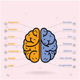 Left brain and right brain symbol,creativity sign,. Creative left brain and right brain Idea concept background design for poster flyer cover brochure ,business royalty free illustration