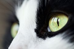 The eye of the cat royalty free stock photos