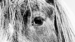 Left Horse Eye Royalty Free Stock Photo