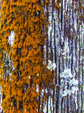 Left orange, right white colored isolation tree trunk. A beautiful isolation in the middle of orange and white colors on a tree trunk stock photography