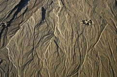 Oceanside sand stream traces dog footprints royalty free stock photos