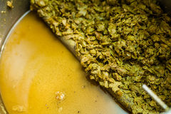 Left-Overs of Hops and Essential Oils of the mash  Stock Photo