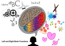 Left and Right brain function Royalty Free Stock Photos