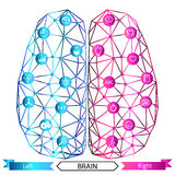 Left and right brain functions concept Royalty Free Stock Images